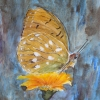Aquarelle_Tiere 5-2-25_schmetterling